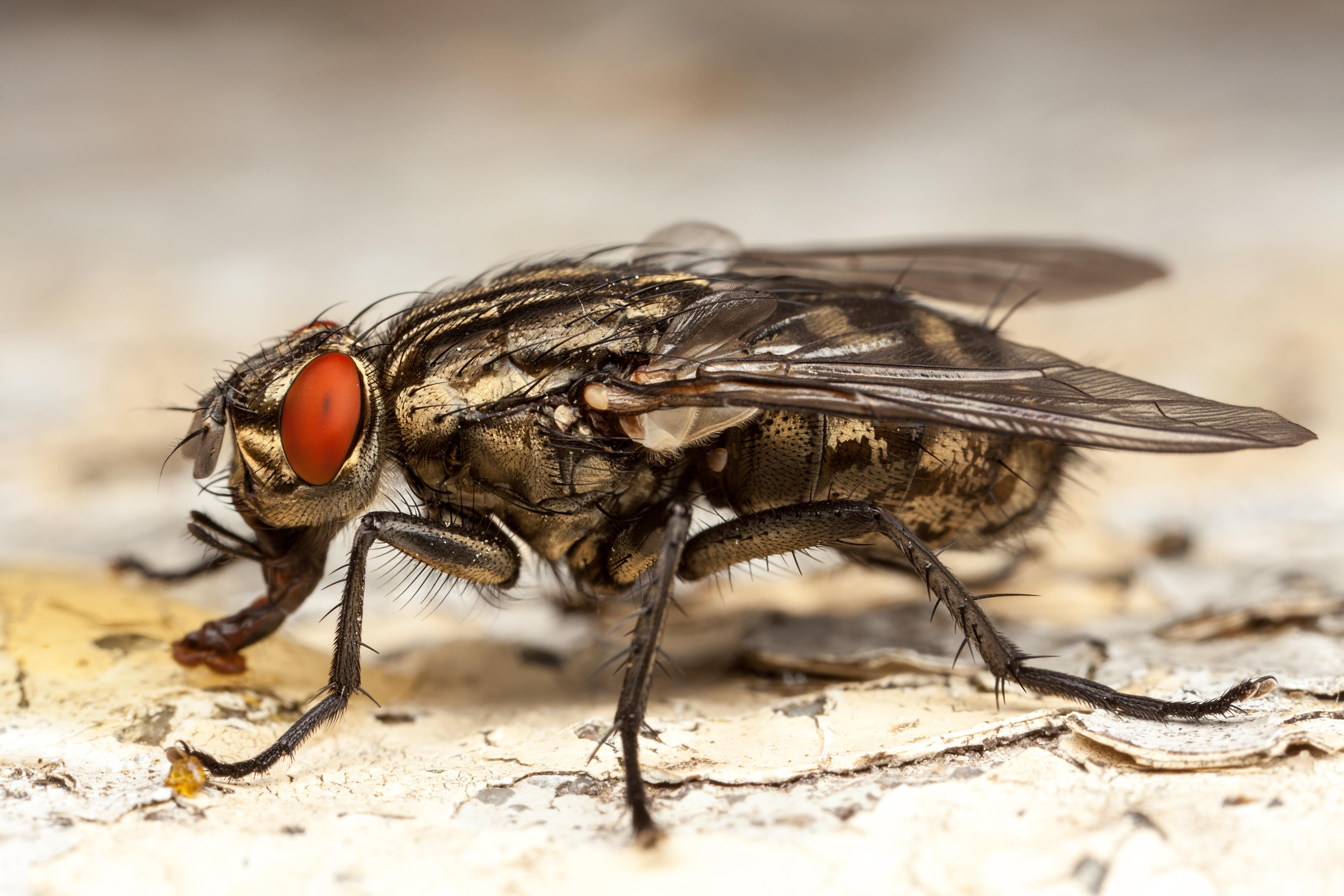 Обработка от мух и мошки в Самаре