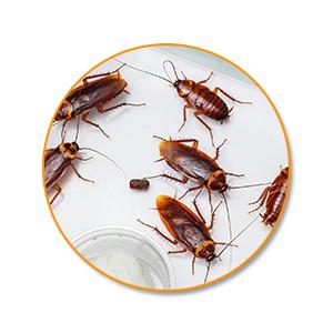 Борьба с тараканами в Самаре