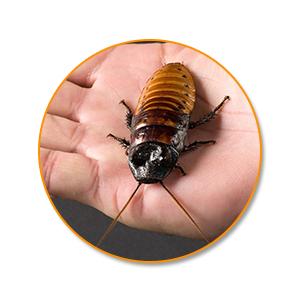 Уничтожение тараканов в Самарской области